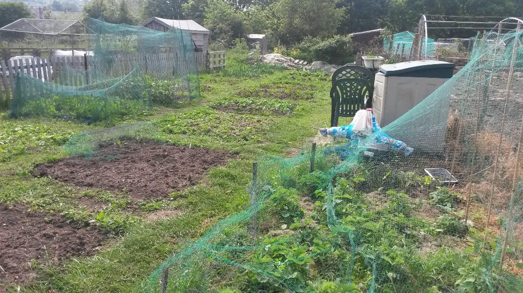 Veggie growers?-forumrunner_20140616_211646.jpg