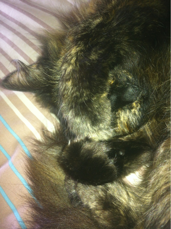Your pets and Their Names?-image-926568213.jpg