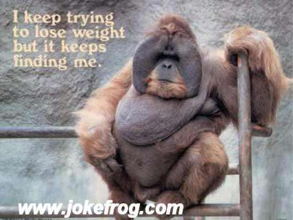 funny pics sayings. Need Diet jokes, pictures, saying's, funny stories.